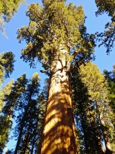 giantsequoiafeat