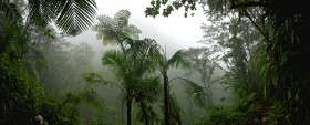 TROPICAL RAINFOREST (Read with Phonics)