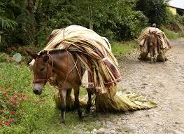 mule4