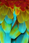 feathers1