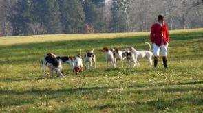 hunting dog 2