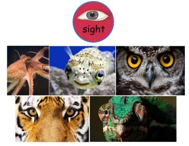 sight animals