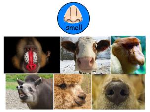 smell animals