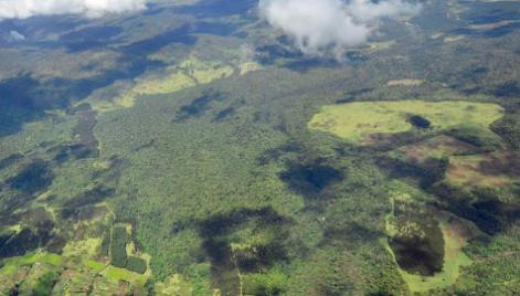 MAU FOREST